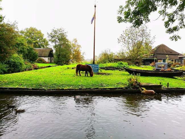 Giethoorn Giethoorn In Holland  Horse River Canal Water Little Venice The Netherlands Canals Flag Green Grass Charming Boat
