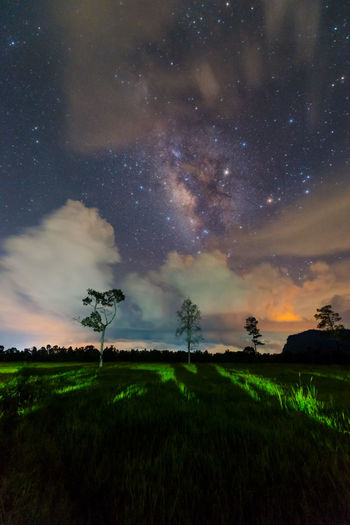 Night landscape with colorful MilkyWay File Art Sky Cloud - Sky Scenics - Nature Beauty In Nature Tranquility Star - Space Field Grass Plant Environment Tranquil Scene Landscape Nature Night Land Tree Green Color No People Astronomy Space Outdoors