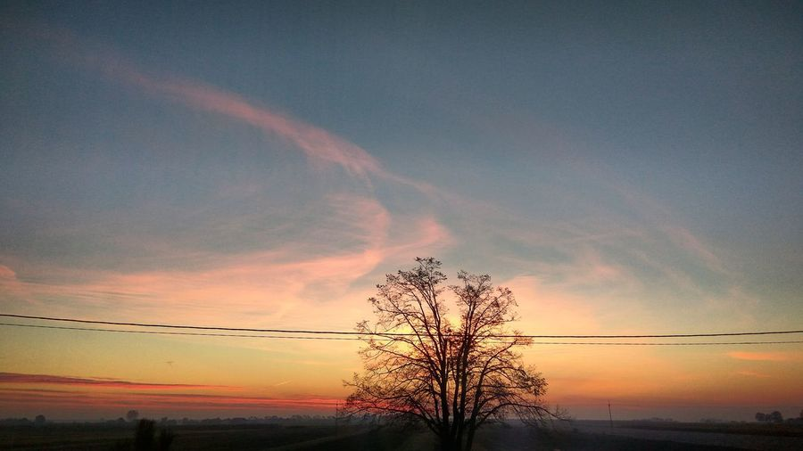 Today sunrise Sky Tree Electricity Pylon Bare Tree Power Line  Cloud - Sky Low Angle View Cloud Nature Power Supply Cable Outdoors Beauty In Nature