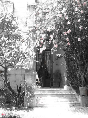 Colorsplash Hanging Out Taking Photos Hugging A Tree Lovely Place Nostalgic  Spring Into Spring Secret Garden by me