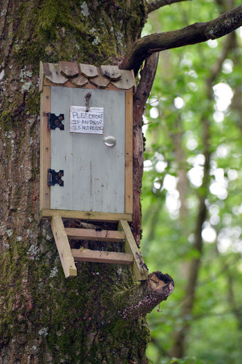Close-up of mailbox on tree trunk in forest