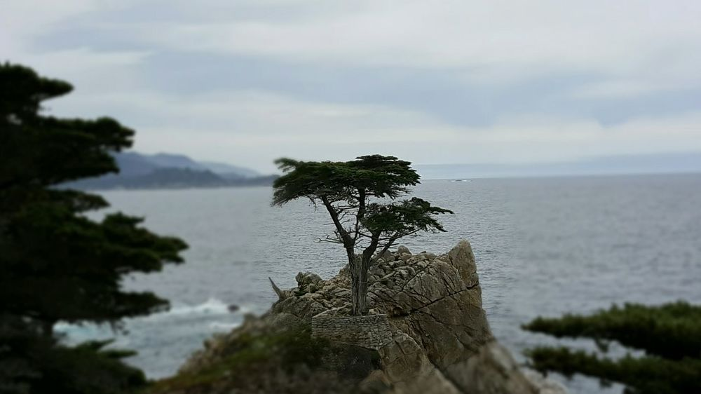 The Lone Cypress 17 Mile Drive Coastline Carmel-by-the-sea California Landscapes Pebble Beach Scenic View Beauty In Nature EyeEm Best Shots - Nature EyeEm Gallery Eyeemphotography EyeEm Tree_collection  Coastal_collection Horizon Over Water My Year My View S6