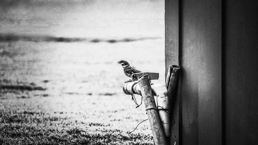 View of bird perching on wood