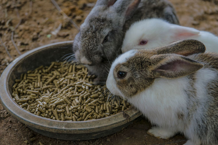 High angle view of bunnies feeding from bowl on field
