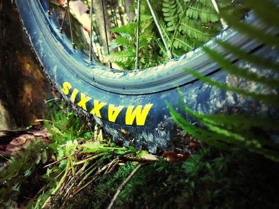 Maxxis In The Forest
