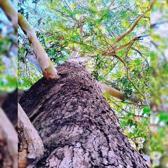 Mi fuerza es como la raiz de un eucalipto. Con el tiempo crese muy alto y con una esencia sanadora. Se como una raiz y alimentate de las mejores impreciones SanCayetano Tepic Plenitude Natural