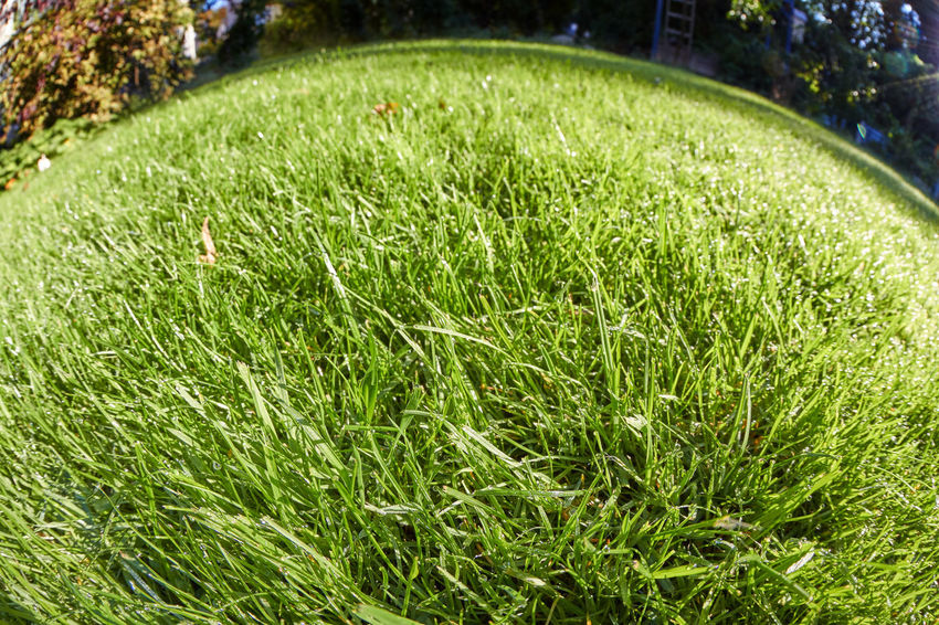Grass Grass Activity Beauty In Nature Blade Of Grass Close-up Day Environment Field Front Or Back Yard Grass Green Color Growth Land Lawn Meadow Nature No People Outdoors Park Park - Man Made Space Plain Plant Sunlight