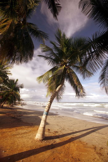 Coconut Palm Trees Growing At Beach Against Sky