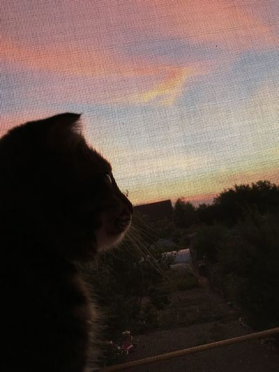 Portrait of woman with cat against sky during sunset