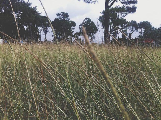 Grass Nature 25 Days Of Summer Taking Photos