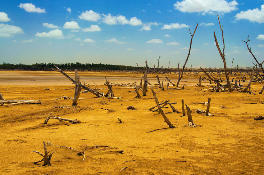 A dead tree forest in a desolate desert. Arid Blue Clouds Colombia Desert Desolate Drought Dry Environment Guajira Guajira, Colombia Heat Hot Landscape Nature Orange Outdoors Sand Scenery Sky Travel Tree View Wilderness Yellow
