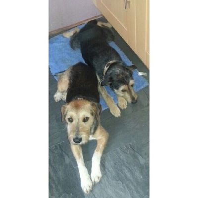 My dogs?? Dogs Peanut Choccie Pets love them !