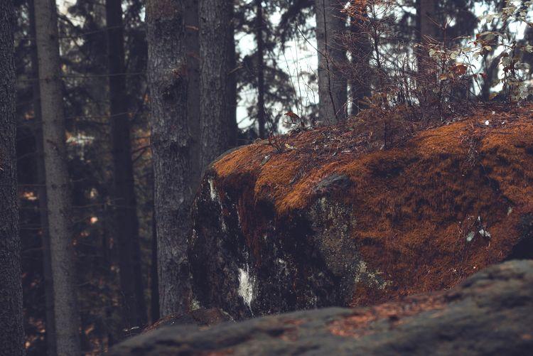 The autumn rock