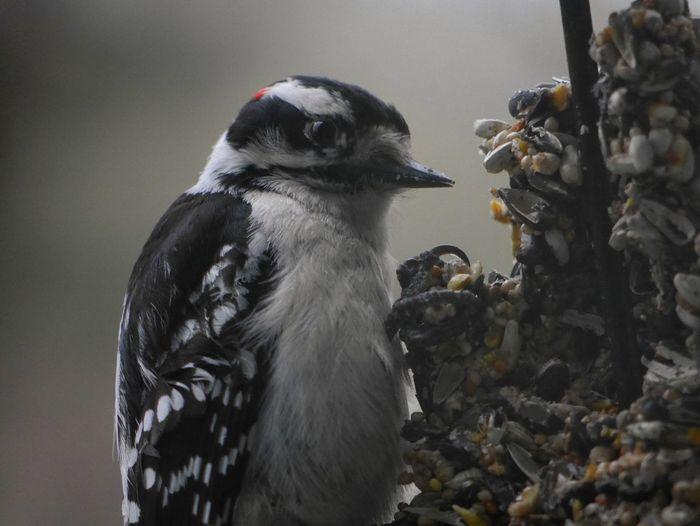 Bird on feeder