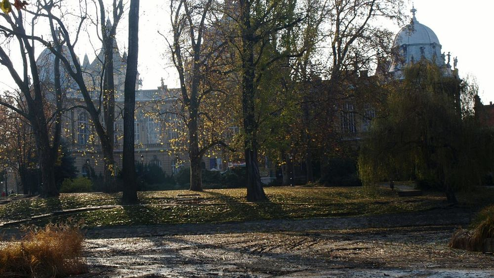 City Park Budapest Autumn Tree Leaves Autumn Colours Outdoors Castle Architecture Travel Destinations Historical Building Sunlight Shadows