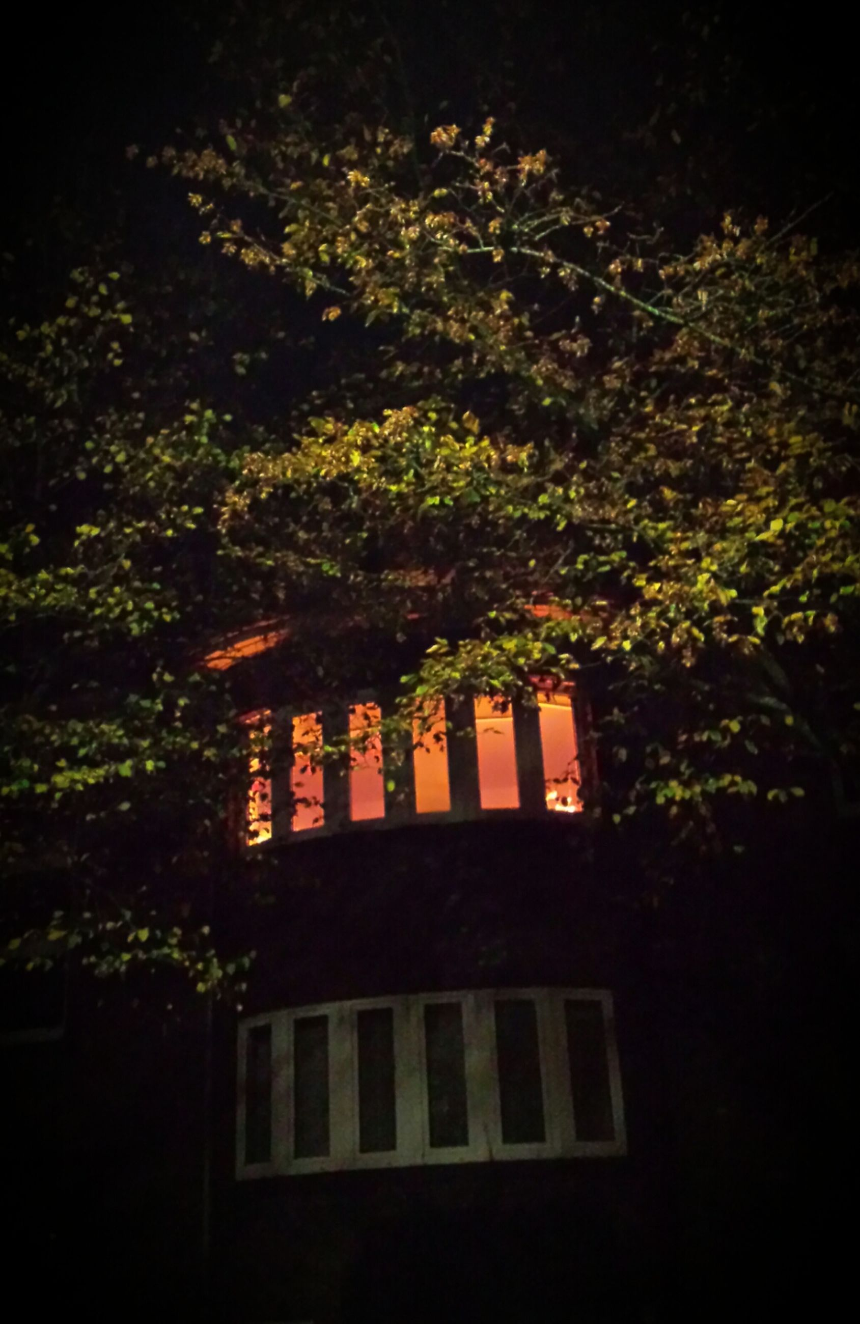 architecture, building exterior, built structure, tree, growth, house, low angle view, window, residential building, residential structure, night, nature, no people, plant, outdoors, sunlight, branch, leaf, building