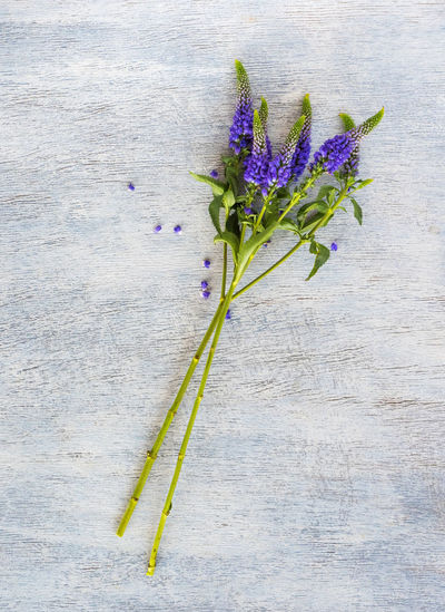 Flower Flowering Plant Freshness Plant Nature Fragility Purple No People Vulnerability  Leaf Beauty In Nature Plant Part Green Color Close-up Wood - Material High Angle View Plant Stem Indoors  Table Growth Flower Head