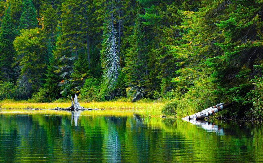 Water Plant Tree Reflection Lake Beauty In Nature Waterfront Growth Green Color Nature Scenics - Nature Real People Day Tranquility Forest Tranquil Scene Non-urban Scene Land Outdoors