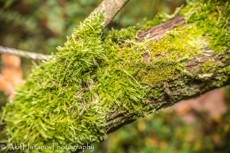 Beauty In Nature Close-up Focus On Foreground Freshness Green Color Growth Moss Nature No People Plant Tree