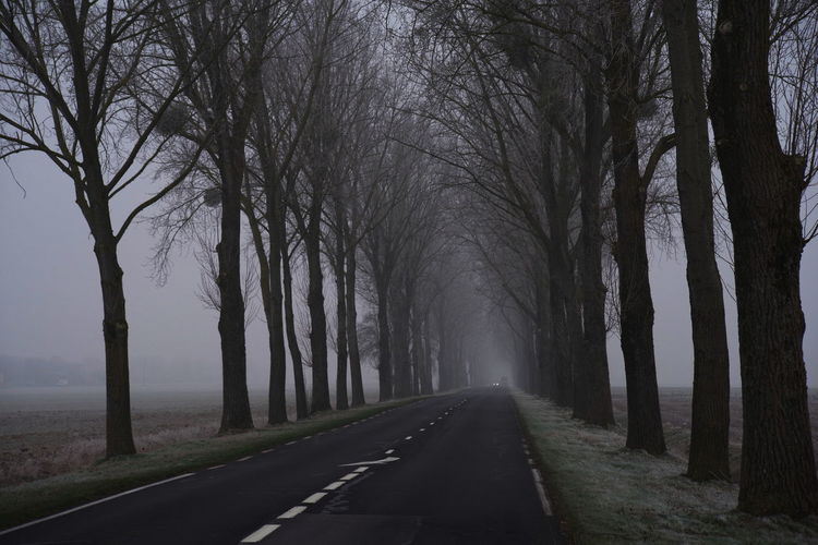 on the road again Foggy Weather Lost In The Landscape Road No People Perspective View Trees Alley