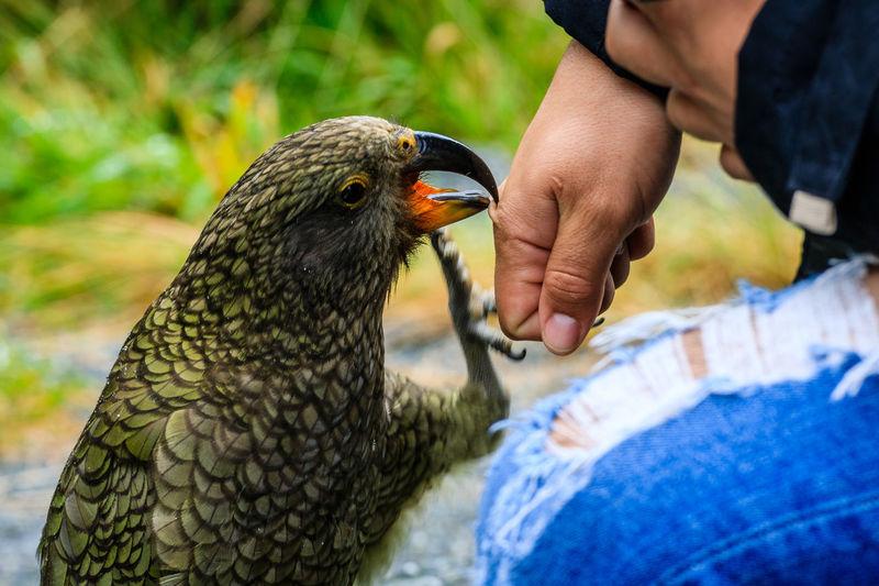 Close-up of hand feeding bird