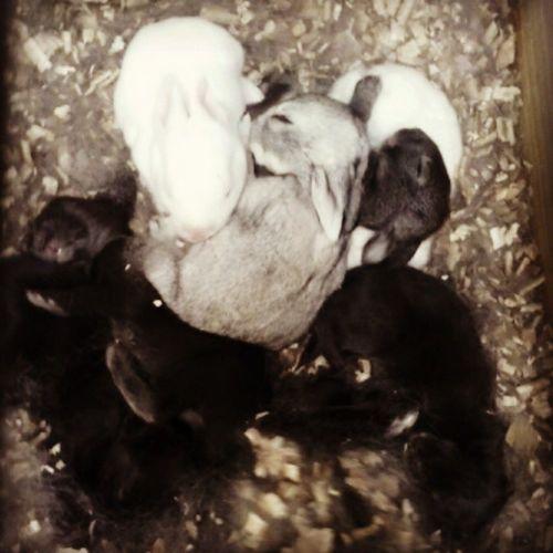 Conejos Baby TERNURAS Pequeños Misvidas