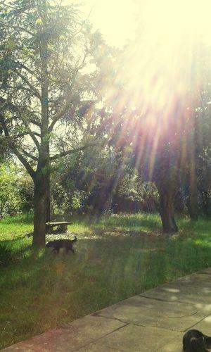 Rays Of Light Rayon De Soleil Rayos De Sol Jardin Nature Naturaleza Jardins Garden Arboles Arbres Arbre Arboles , Naturaleza Vert Serenity Sérénité Pins Pinos Verano Été
