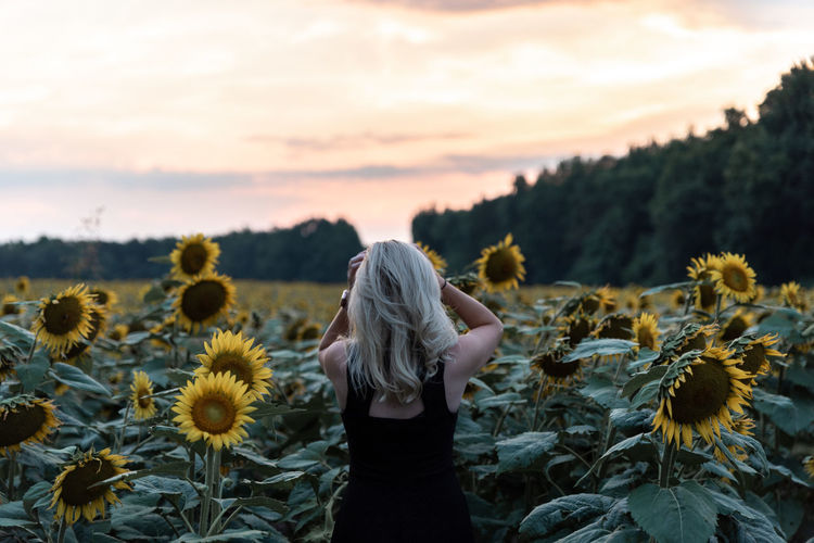 Rear View Of Young Woman Standing At Sunflower During Sunset