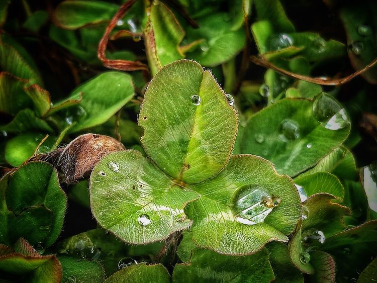Leaf Green Color Nature Plant No People Beauty In Nature Water Freshness Outdoors