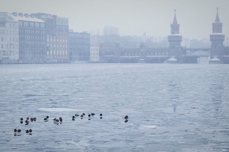 Birds Perching On Frozen Spree River In City During Winter