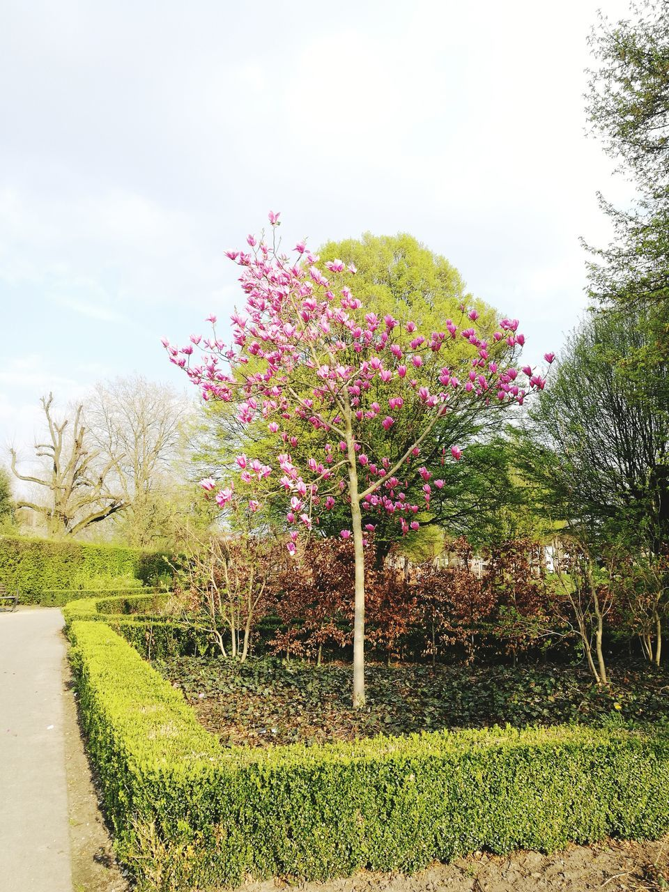 Flowers Growing On Tree Against Sky