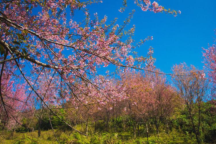 Fresh flower tree against blue sky