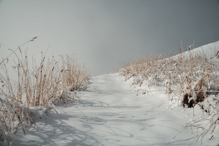 Plants on snow covered field against sky