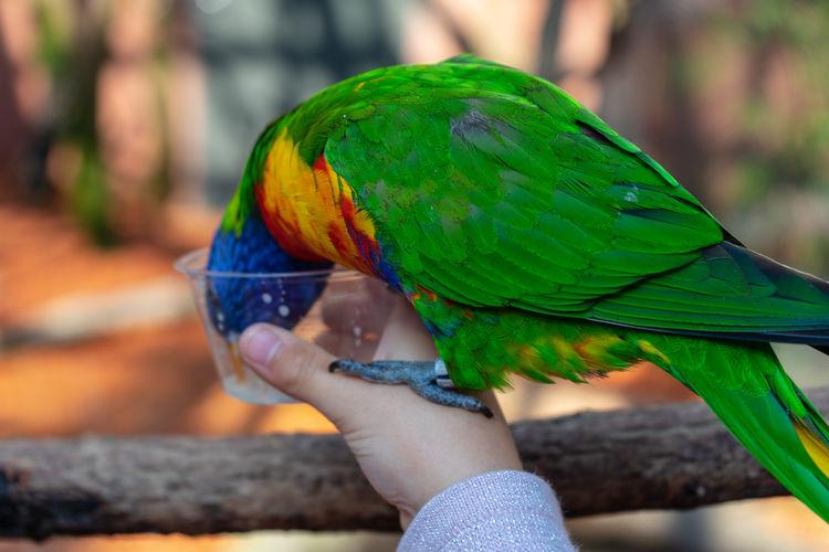 Parrot Hand