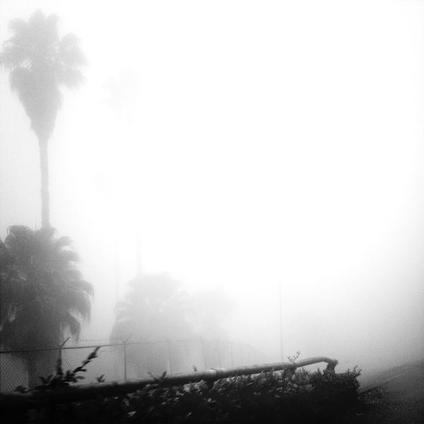 Fog EyeEm Bnw Foggy Morning From My Car