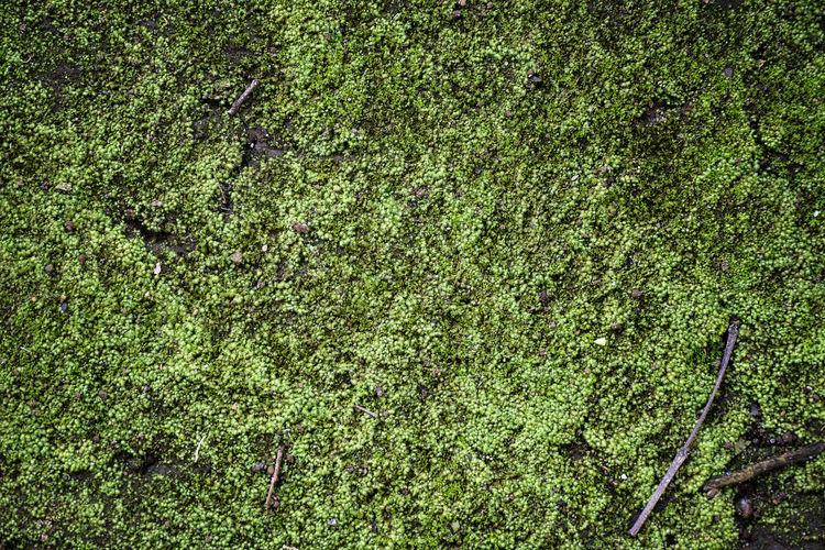 Full frame shot of tree growing in field