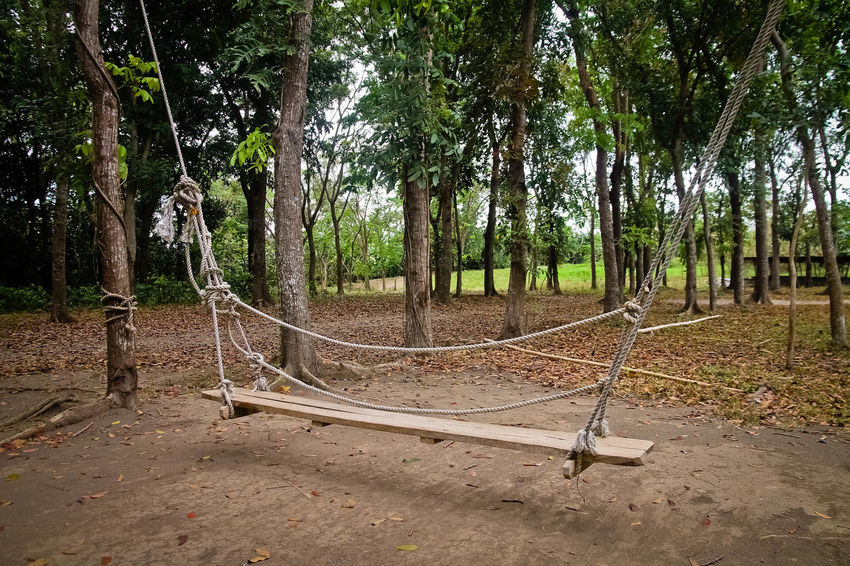 Wood Beauty In Nature Nature No People Outdoors Rope Swing Swing Tree Tree Trunk Wooden Wooden Swing