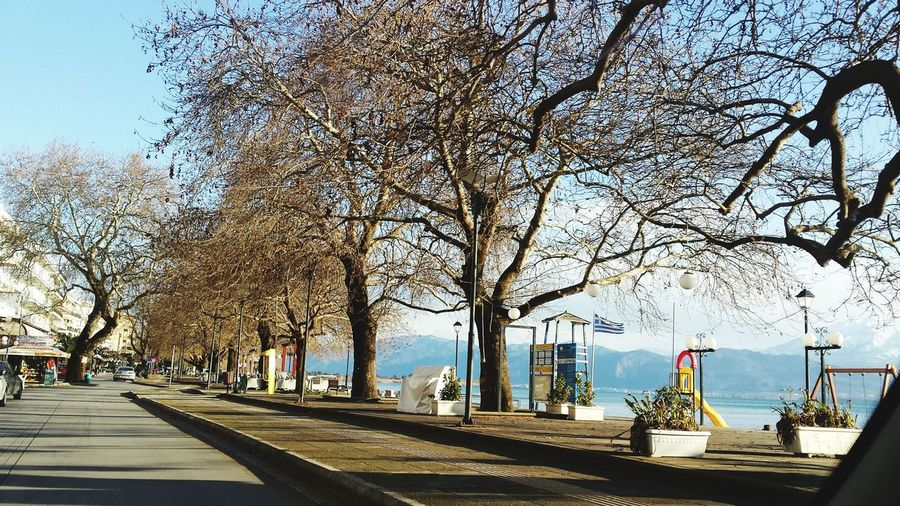 Trees See Grecce In Greece Wintertime Nafpaktos Taking Photos Amazing View