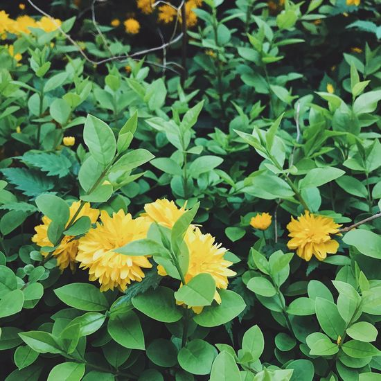 Flower Leaf Fragility Growth Beauty In Nature Nature Freshness Petal Plant Green Color Blooming Flower Head Yellow Close-up Outdoors Day
