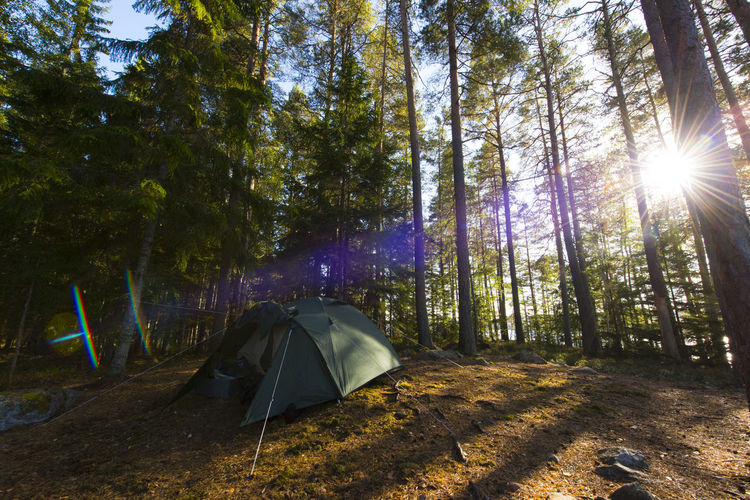 Tent against trees at forest