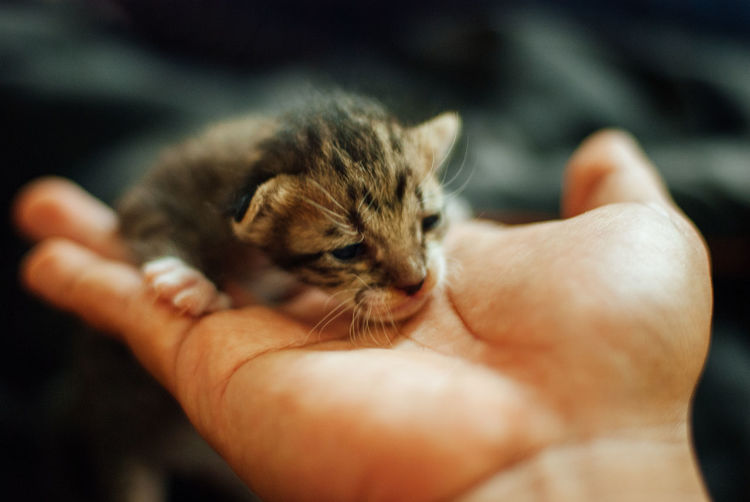 Close-up of a hand holding small cat