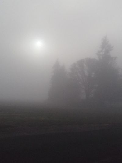 Countryside Fog No People Nature Landscape Outdoors Tranquility Day Rural Scene Scenics Beauty In Nature Tree
