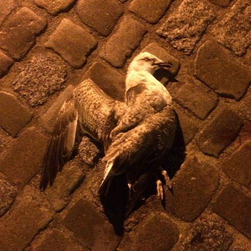 Dead seagull Dead Bird Warnemünde Rostock Seagull Dead Animal Cadaver Creativity