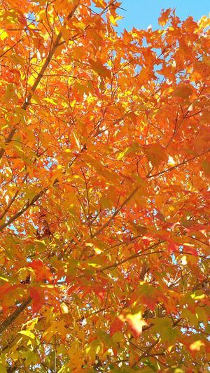 Fall In New England Fall Beauty Massachusetts