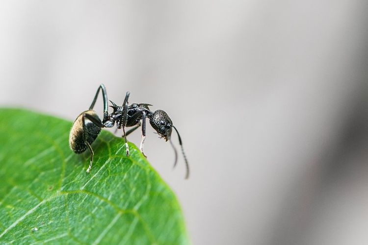 Take the leap! Sharp RISK Brave Ant Invertebrate Insect Animal Themes Animal Wildlife Animal Animals In The Wild One Animal Plant Part Close-up Arthropod Nature Leaf No People Green Color Zoology Macro Day
