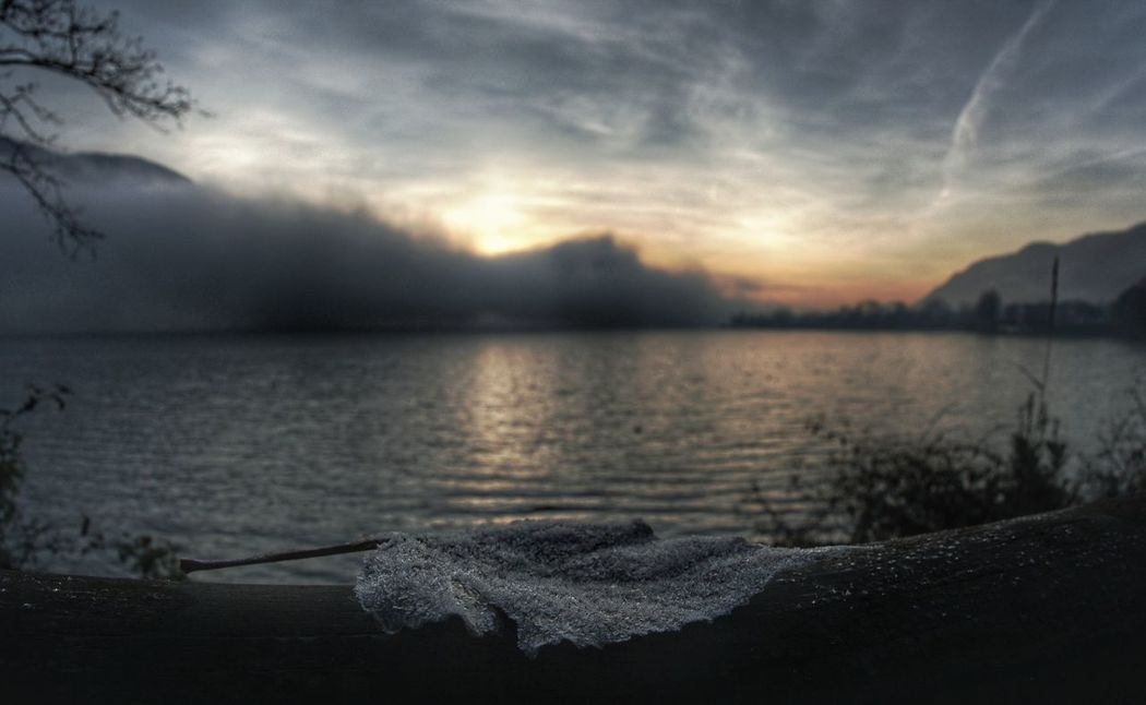 frozen leaf Frozen Leaf Foglia Inverno Alba Gelido Water Tree Sunset Sea Beach Storm Cloud Reflection Sky Cloud - Sky Horizon Over Water Atmospheric Mood Dramatic Sky Cloudscape Romantic Sky Cumulus Cloud Overcast Sky Only Foggy