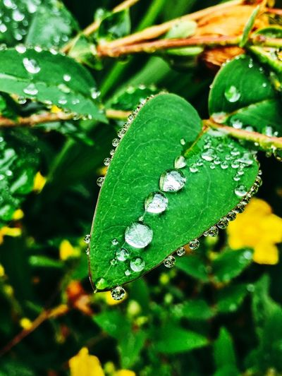 Leaf Green Color Nature Growth Close-up Drop Beauty In Nature Focus On Foreground Plant No People Day Outdoors Wet Water Freshness Fragility Animal Themes