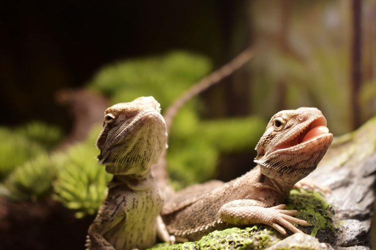 Close-up of lizard on field