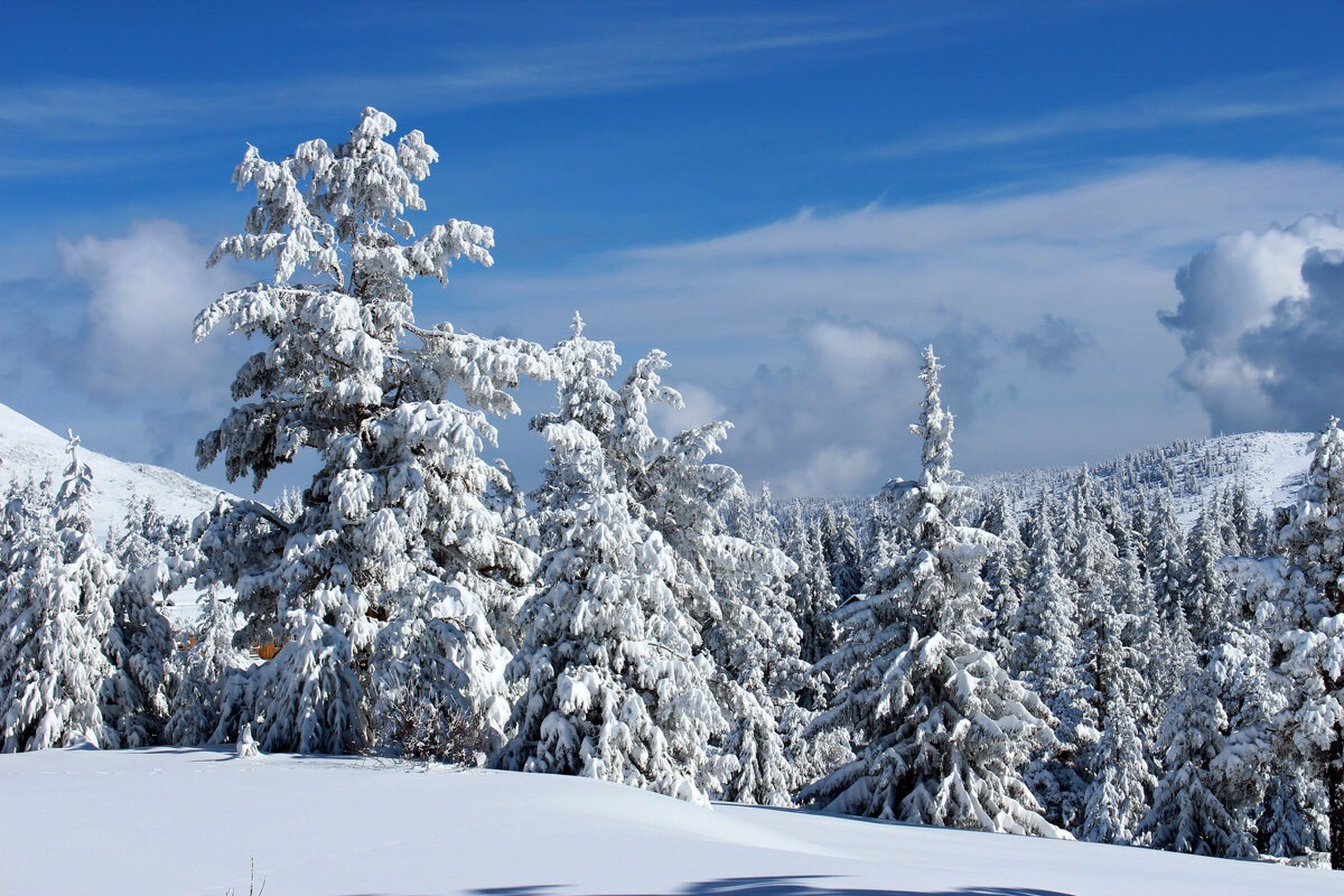 winter, cold temperature, snow, season, tree, weather, tranquil scene, scenics, white color, landscape, sky, nature, tranquility, non-urban scene, beauty in nature, covering, majestic, mountain, pine tree, cloud - sky, travel destinations, spruce tree, solitude, remote, outdoors, deep snow, day, tourism, woodland, tall - high
