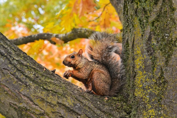 #foliage #nut Nature_collection Nature EyeEm Nature Lover EyeEm Gallery EyeEm Best Shots - Nature #ithaca #autumn #fall Naturelover Tree Tree Trunk Squirrel Leaf Close-up Fall